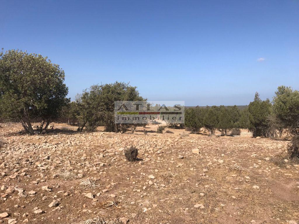 Terrain de 40000 m² à Essaouira – Idéal projet touristique